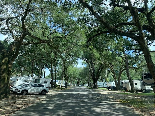 An RV park with various trees overhead
